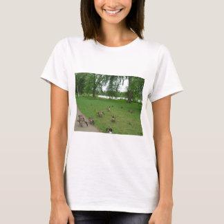 Gansos canadenses pelo lago durante o verão tshirt