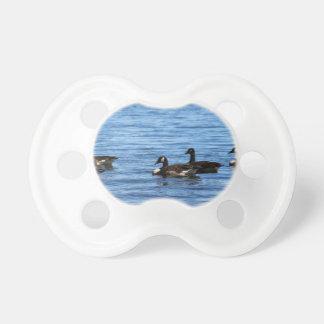 Gansos no lago chupeta de bebê