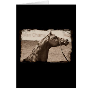 Garanhão do Arabian do Sepia Cartão