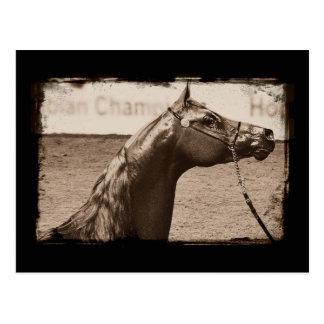 Garanhão do Arabian do Sepia Cartoes Postais