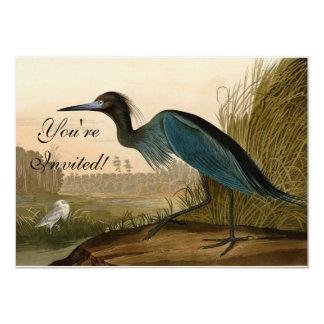 Garça-real do azul de Audubon Convite 11.30 X 15.87cm