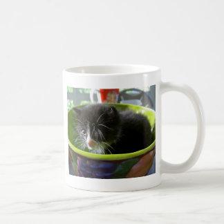 Gatinho bonito do bebê do gato do gatinho do caneca de café