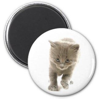 gatinho bonito ímã redondo 5.08cm