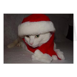Gatinho do Natal Cartão Comemorativo