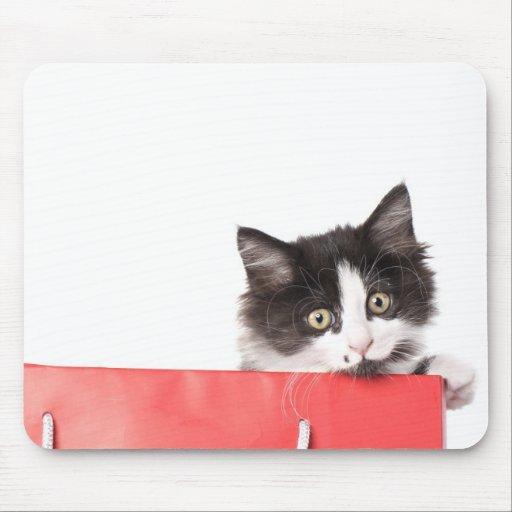 gatinho em um vermelho do saco mousepads