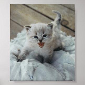 gatinho pequeno do bebê pôster