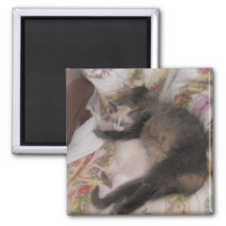 gatinhos bonitos ímã quadrado