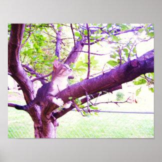 Gato bonito em uma árvore de Apple Poster