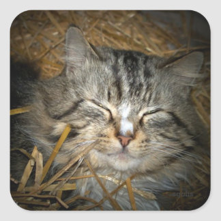 Gato bonito na cama da etiqueta da palha