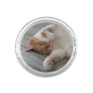 Gato bonito que dorme em volta do anel