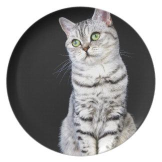 Gato britânico adulto do cabelo curto no fundo prato de festa