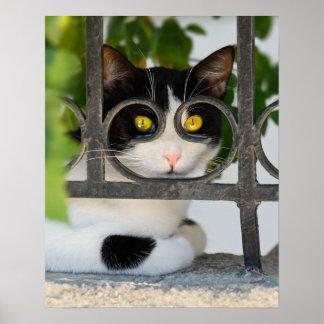 Gato curioso com a foto engraçada do quadro de póster