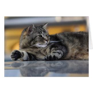 Gato de Como do lago - 1 Cartão Comemorativo