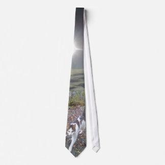 Gato de passeio gravata