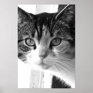 Gato em preto e branco impressão