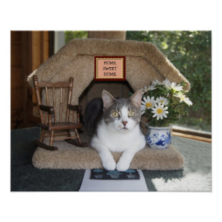 Gato engraçado Home doce Home Posters