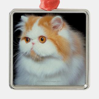 Gato Eyed e bonito da laranja Ornamento Quadrado Cor Prata