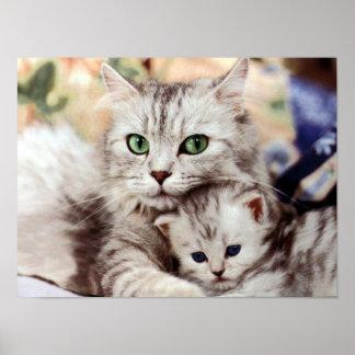Gato & gatinho da mãe poster