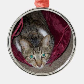 Gato malhado de Brown que joga o ornamento
