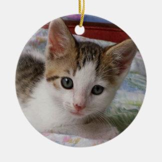 Gato malhado & ornamento branco do gatinho
