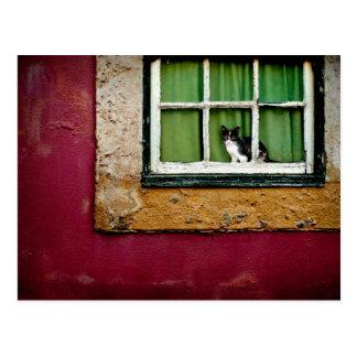 Gato na janela cartão postal