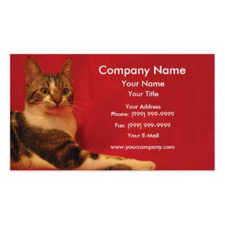 Gato no fundo vermelho cartão de visita