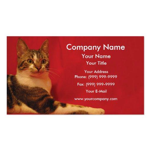 Gato no fundo vermelho cartao de visita