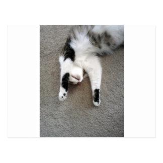 Gato preguiçoso cartão postal