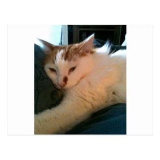 Gato preguiçoso, Relaxed Cartão Postal
