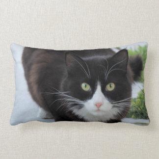 Gato preto e branco travesseiros de decoração