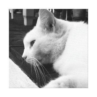 Gato preto e branco impressão em tela