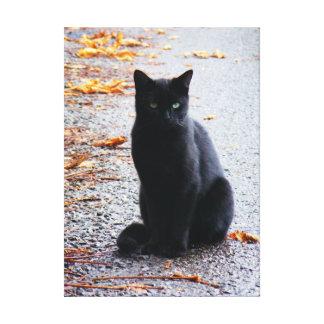 Gato preto em canvas da queda impressão de canvas esticadas
