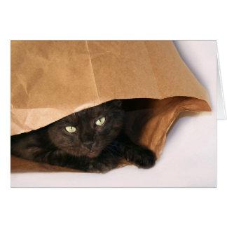 Gato preto em um cartão do saco