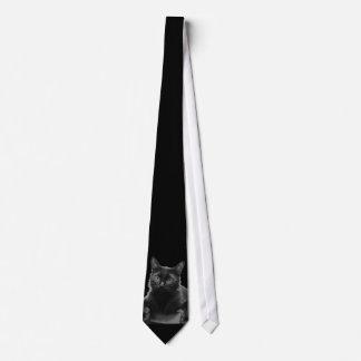 Gato preto gravata