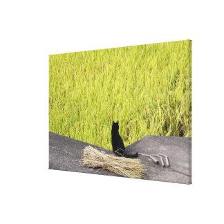 Gato preto na almofada de arroz impressão em tela