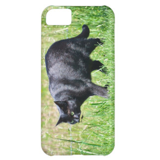 Gato preto na grama verde - caso do iPhone 5 Capa Para iPhone 5C