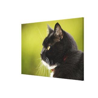 Gato preto impressão em tela