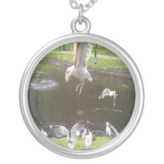 Gato que voa uma gaivota colar banhado a prata