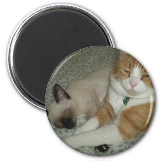Gatos bonitos ímã redondo 5.08cm
