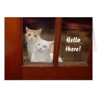 Gatos engraçados Notecard Cartão De Nota