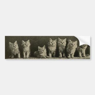 Gatos velhos retros dos gatinhos dos gatinhos de adesivo para carro
