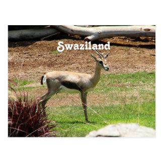 Gazela de Suazilândia Cartão Postal