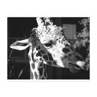 Girafa preto e branco impressão em tela