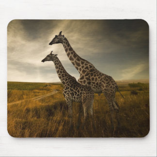 Girafas e a paisagem mouse pad