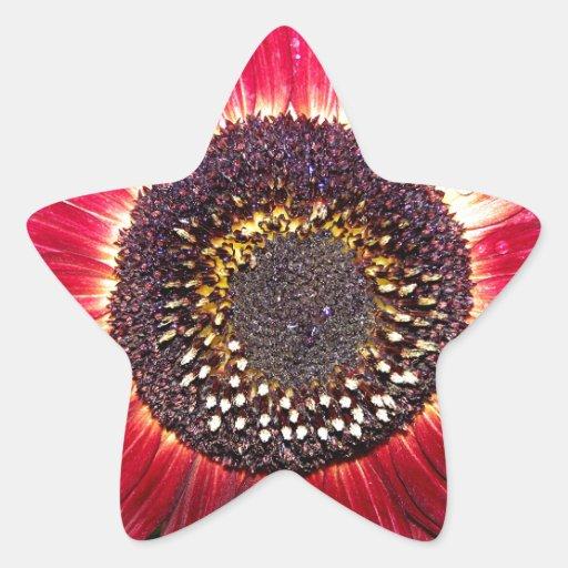 Girassol carmesim adesivos em forma de estrelas