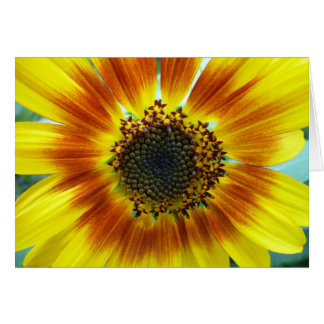 Girassol laranja-amarelo bonito cartão