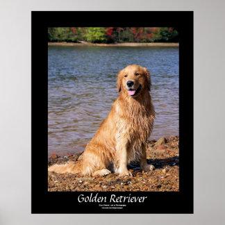 Golden retriever que senta o poster preto da beira