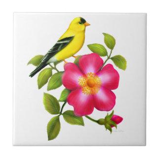 Goldfinch americano no azulejo cor-de-rosa
