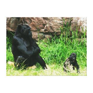 Gorila da mãe que olha seu bebé do bebê de oito me