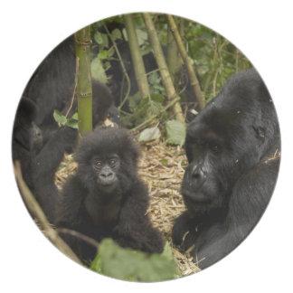 Gorila de montanha, adulto com jovens 2 louças de jantar